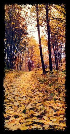 Kultainen polku syksyyn / Golden path to autumn, Tampere, Finland