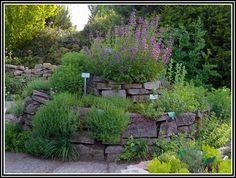 New Rosmarin Im Garten