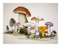 Buy posters, art prints and canvas prints on ARTFLAKES. Sell your art, design and photography. Watercolor Plants, Watercolor Art, Vegetable Illustration, Bright Art, Sashiko Embroidery, Mushroom Art, Landscape Quilts, Guache, Color Pencil Art