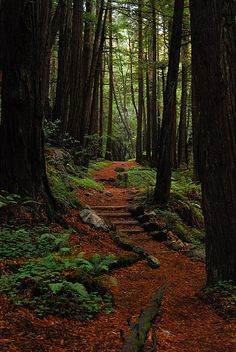 Limekiln State park , really one of the most unreal places I have ever seen.