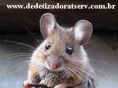 DEDETIZADORA TSERV : Camundongo é rato? tserv.com.br
