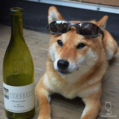 """""""Some might say I'm too cool for this fruity wine, but I'd say they're wrong. I'm just the right amount of cool."""" 