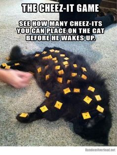 The cheez-it game - I think this makes me want to run out and get a cat!!