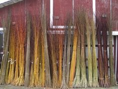 """site about willow growing for basketry and living sculptures."" Pictures of different varieties on web page. Order cuttings from this site in early Spring 2014 for planting next spring. -CAB"