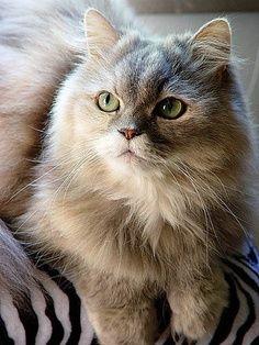 Lindo, olhos verdes!