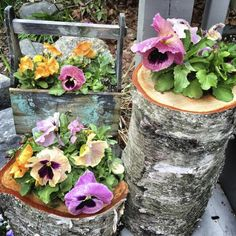 Think Outside the Pot--Great Ideas for Container Gardens: Introduction to Container Garden Ideas