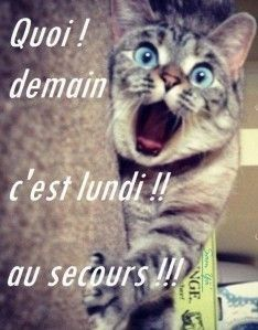 Animals And Pets, Funny Animals, What's New Pussycat, Tu Me Manques, Image Fun, Bon Weekend, Cat Dog, Cute Photography, Cat People