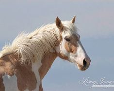 Items similar to Meteor Turns - Fine Art Wild Horse Photograph - Wild Horse -Sand Wash Basin - Fine Art Print - Wild Horse Photograph on Etsy Pretty Horses, Beautiful Horses, Animals Beautiful, Cute Animals, Caballo Tobiano, Picasso, Broken Horses, Colorado, Majestic Horse
