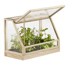 Buy Greenhouse Mini from Design House Stockholm. A small table version of the Greenhouse. For indoor use only. Indoor Greenhouse, Greenhouse Plans, Indoor Garden, Indoor Plants, Diy Mini Greenhouse, Homemade Greenhouse, Winter Greenhouse, Aquaponics Greenhouse, Aquaponique Diy
