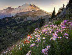 Wildflowers, Mt. Rainier, Washington  photo via katie