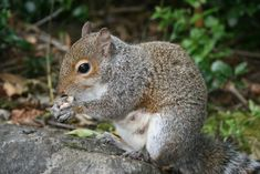 How to get rid of squirrels with baking soda gardens - How do you keep squirrels out of your garden ...