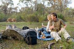 Picnic with the Kangaroos at The Louise, an idyllic luxury vineyard retreat in the Barossa Valley