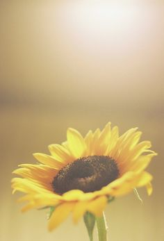 Sunflowers make me happy :))