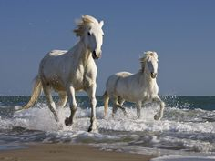 """""""The armies which were in Heaven followed YESHUA upon white horses, clothed in fine linen,white and clean.""""-Rev.19:14"""