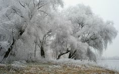 winter backround full hd, 1920x1200 (632 kB)