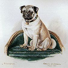Watercolor portrait of one of The Duke and Duchess of Windsor's Pugs