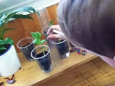 measuring plant growth