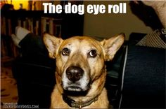 Funny Pictures Of The Day – 65 Pics