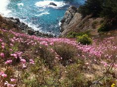 Big Sur, California: No other place on earth will you encounter those drop-dead gorgeous cliffs scattered with pink flowers into the deep, deep blue. Rent a car and a cabin and go get your writing done. Or just go and get lost in the woods with you boyfriend. So quiet, so pretty, so rugged. Bliss.