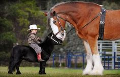a horse's size can be intimidating and anyone who strongly fears this animal is known to have Equinophobia.