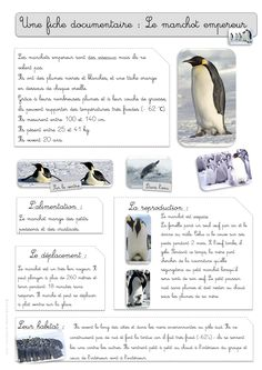 Des tonnes de textes 1 241 × 1 754 pixels Plus Science Projects For Kids, Activities For Kids, Grade 2 Science, Montessori Science, Polo Norte, Fun Facts About Animals, Alternative Education, Polar Animals, Cycle 2