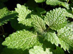 Cyklus, který vás naučí, jak nakládat s bylinkami a jak je správně použít.