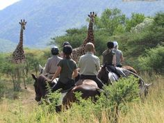 PAKAMISA – Private Game Reserve Discover the taste of Paradise at this perfect Hide-away! If