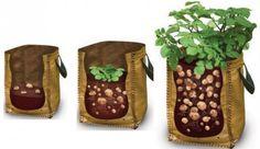 Spôsob pestovania zemiakov hoci aj na balkóne.Už nemusíte mať záhradu