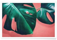 MONSTERA #2 - LEEMO - Premium Poster