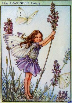 cicely Mary Barker- Flower Fairies - Google Search