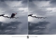 Endangered species campaign