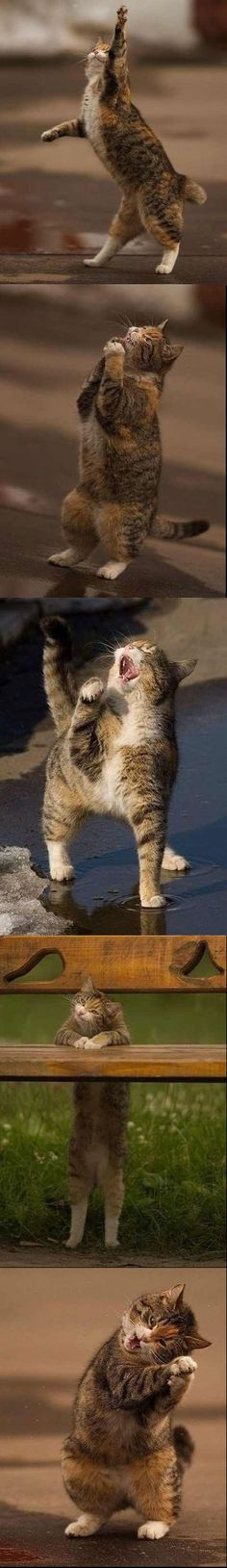 I thought we are at musical Funny Pics, Funny Pictures, Psi, American Curl, Havana Brown, Raining Cats And Dogs, Norwegian Forest Cat, Cute Animal Pictures, Catio