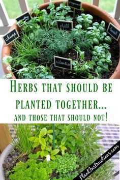 Herbs That Grow Together and ones that dont. What should you plant together in the herb garden and what to keep selevated. herb garden ideas Herbs That Grow Together In a Pot Veg Garden, Edible Garden, Lawn And Garden, Veggie Gardens, Small Herb Gardens, Balcony Herb Gardens, Vertical Herb Gardens, Fruit Garden, Herb Garden Design