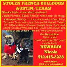 STOLEN 2/19 AUSTIN, TEXAS Please Share! #frenchie #frenchbulldog #austin #texas