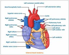 The heart diagram unlabeled anatomy pinterest heart diagram and diagram level of heart control diagrammuscle labeling diagram ccuart