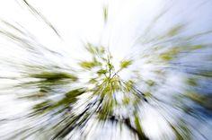 하늘에서 쏟아질듯  이제 녹색은 세상을 지배할것이다. ㅎㅎ