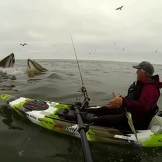 A lucky guy in wright moment in wright place, thrilling and frightening, what an amazing experience, he almost got in his mouth. What a wonderful shot. That was amazing. Shots, Boat, In This Moment, Guys, Videos, Amazing, Places, Dinghy, Lugares