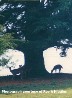 Deer on the skyline. Photograph Roy A Higgins