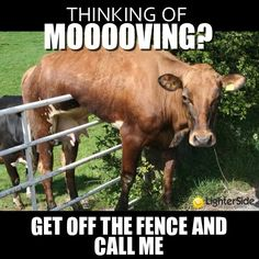 Time to get Mooving?