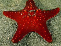 Sea stars are purely marine animals, even using sea water instead of blood to pump nutrients throughout their bodies.