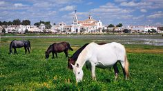 Donana National Park, Spain : Best Places to Go Horseback Riding : TravelChannel.com