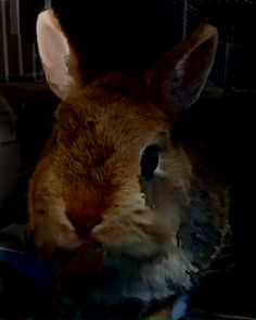 food care tips rabbit food care tips + diet information!rabbit food care tips + diet information! Cute Baby Bunnies, Cute Baby Animals, Cute Babies, Funny Animals, Rabbit Toys, Pet Rabbit, Pet Bunny Rabbits, Rabbit Pictures, Animals For Kids