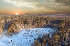 Toute la taiga en Sibérie : Extraordinaires forêts du monde - Linternaute.com Voyager