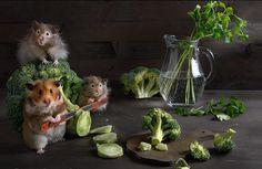 Adventures of Cute Hamsters by Elena Eremina