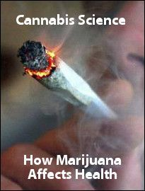 Cannabis Science: How Marijuana Affects Health - Dozens of major studies indicate that the chemicals in cannabis in the lab and in animals have a significant effect on fighting almost all major cancers, including brain, breast, prostate, lung, thyroid, colon, skin, pituitary, melanoma and leukemia cancers. They do this by promoting the death of cancer cells that have forgotten how to die, as well as a reduction in their crucial blood supply, while leaving healthy cells untouched.