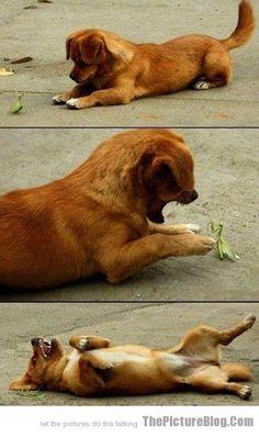 Puppy Battles Praying Mantis