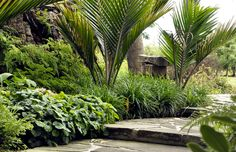 Nikau + Crazy Paving +Ferns
