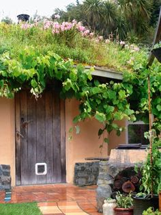 The New Zealand home of Joe Polaischer features a grass roof where plants, including a grapevine and cottage gladioli, grow.