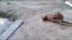¿Qué sabe hacer tu #Perro?