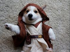 Geeking out | 38 Things That Make CorgisHappy